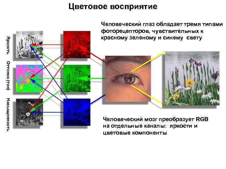 Как человеческий глаз воспринимает свет