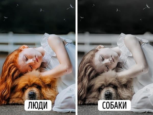 Как видят собаки и человек