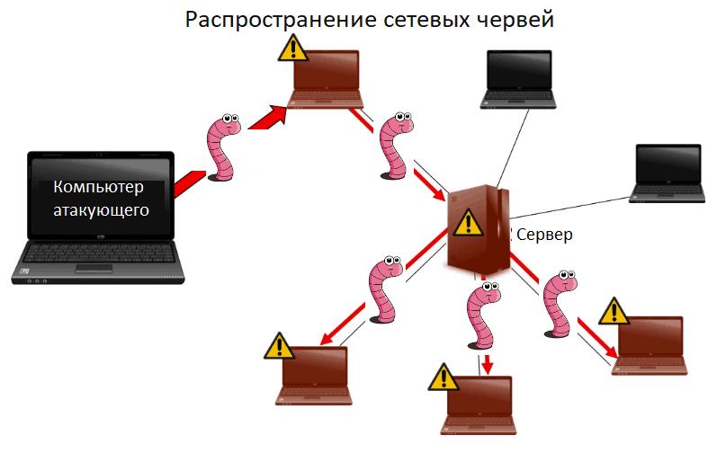 Как распространяется компьютерный червь?