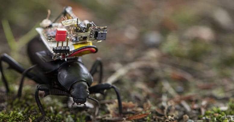 GoPro для жуков. Необычное устройство с интересными возможностями.