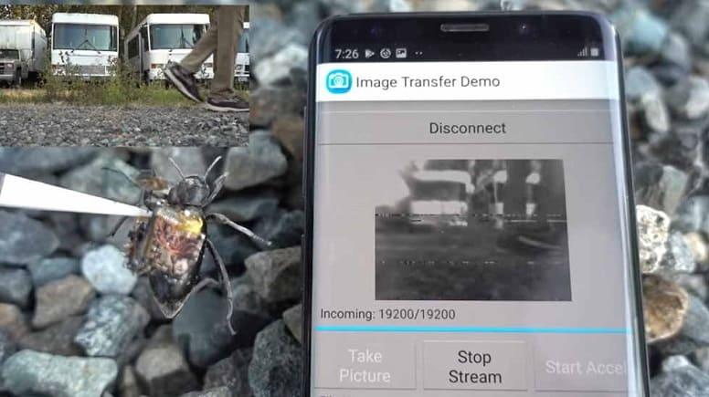 GoPro для жуков