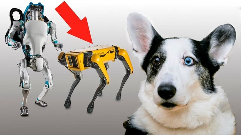 """Робот-собака """"Spot"""" уже в продаже, ждем прыгающего робота-человека"""