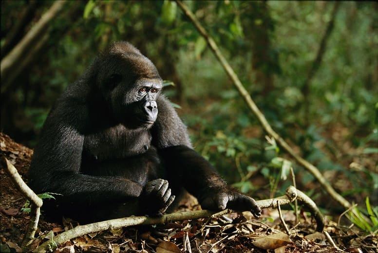За 10 лет мир ничего не сделал для защиты биоразнообразия. «Разрушительный» доклад ООН.