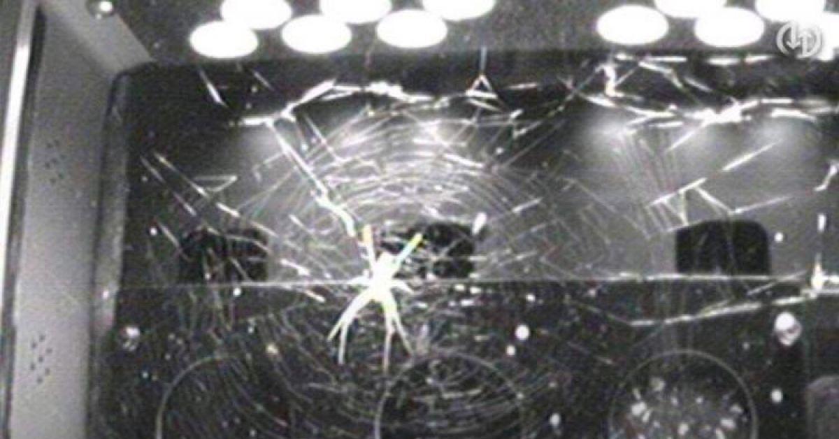 Кому-то пришла в голову блестящая идея доставить пауков на МКС?