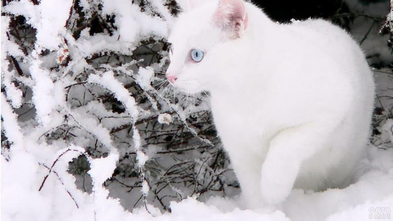 Кот, снежок