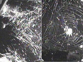 Пауки в микрогравитации