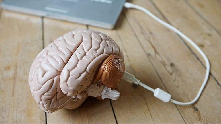 Сколько информации помещается в мозгах?