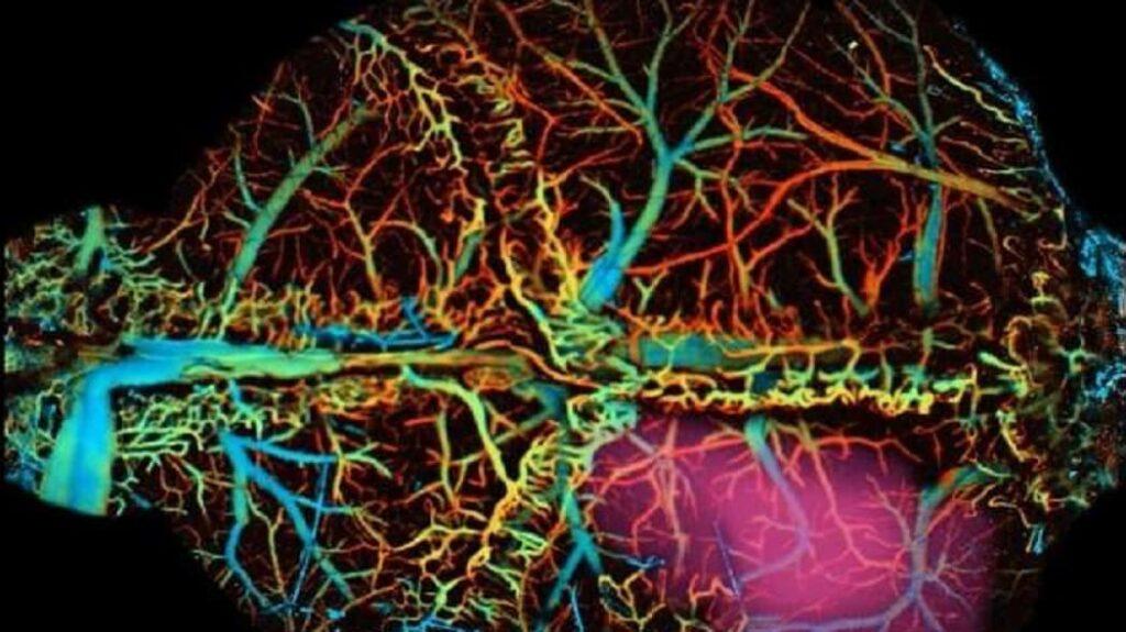 Создан инъекционный рой наносенсоров, считывающих мозг