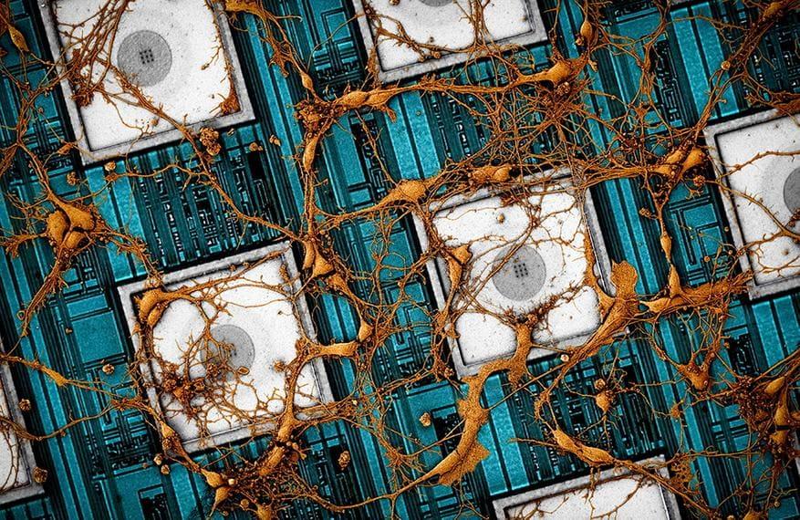 Исследователи хотят скопировать человеческий мозг на микрочип
